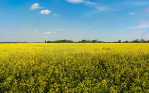 Picture summer, the sky, flowers, blue, spring, yellow, rape, rapeseed field