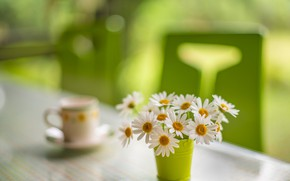 Picture flowers, table, chamomile, bouquet, Cup, white, still life, green background, composition