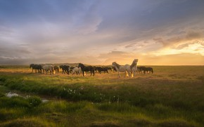 Picture grass, clouds, The sun, horse, grass, clouds, horses, Andrey Bazanov, the Sun, Andrey Bazanov