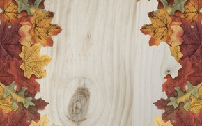 Picture autumn, leaves, background, tree, colorful, wood, background, autumn, leaves, autumn, maple