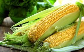 Picture towel, corn, the cob