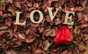 Picture letters, holiday, rose, Valentine's day