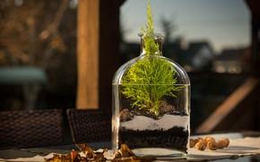 Wallpaper nature, bottle, plant