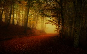 Picture road, autumn, forest, fog, twilight, alley, falling leaves
