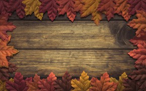 Picture autumn, leaves, background, tree, wood, background, autumn, leaves, autumn, maple