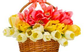 Picture bouquet, tulips, basket