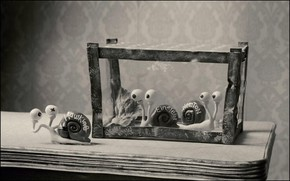Picture TABLE, EYES, CELL, BLACK AND WHITE FRAME, УЛИТКИ, ИМЕНА, УЧЁНЫЕ