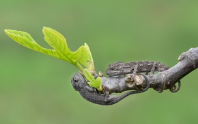 Picture sheet, branch, lizards