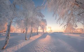 Picture winter, snow, trees, dawn, morning, Russia, Perm Krai, White mountain