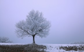 Picture frost, field, snow, tree