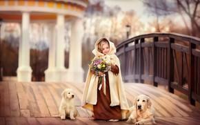 Picture bridge, dog, bouquet, girl, outfit, puppy, Labrador, lady