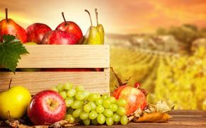 Wallpaper autumn, leaves, landscape, table, background, apples, harvest, grapes, fruit, box, pear, bokeh, acorns