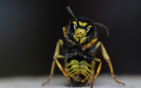 Picture background, OSA, insect