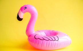 Picture background, round, Flamingo