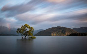 Picture forest, the sky, clouds, mountains, lake, tree, shore, New Zealand, tree, pond, alone, Wanaka, Wanaka