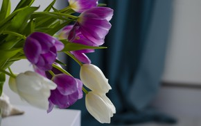 Picture table, background, bouquet, purple, tulips, vase, white