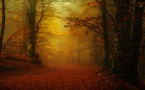 Picture autumn, forest, fog, Park, alley, falling leaves, Golden autumn