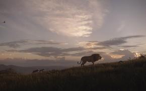 Picture landscape, Leo, the cubs, The Lion King, The Lion King