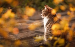 Wallpaper autumn, cat, cat, look, light, nature, tile, back, the sidewalk, rear view, bokeh