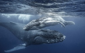 Picture the ocean, baby, family, kit, mom, whales, the whale