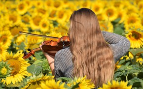 Picture girl, sunflowers, flowers, music, violin, hair, the game, back, yellow, sunflower, long, musical instrument, Rus, …