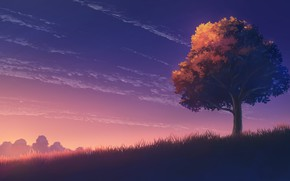 Picture autumn, the sky, sunset, tree