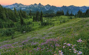 Picture the sky, flowers, meadow