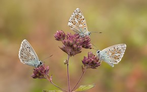 Picture macro, butterfly, background, trio