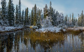Picture autumn, forest, snow, nature