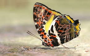Picture macro, background, pattern, butterfly, insect, wings, colorful