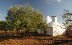 Picture house, Italy, Alberobello, the olive tree