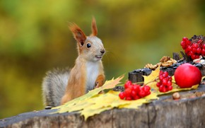 Picture autumn, nature, pose, berries, Apple, stump, protein, nuts, squirrel, Kalina, autumn leaves