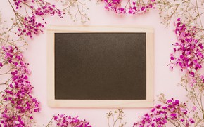 Picture flowers, background, pink, frame, pink, flowers, frame, floral
