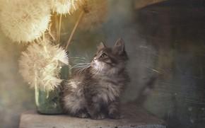 Picture texture, kitty, dandelions, Yuriy Korotun