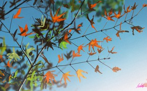 Picture the sky, leaves, branch