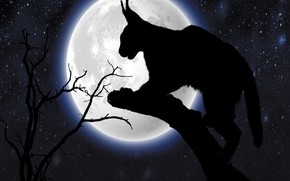 Picture cat, animal, midnight, starry nihgt, silhouettte
