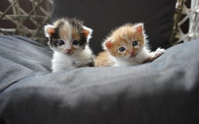 Picture kittens, kids, a couple, two kittens