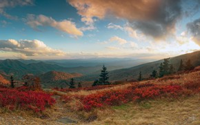 Picture forest, the sky, grass, the sun, clouds, trees, mountains, slope, panorama, USA, the bushes, North …