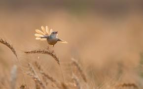 Picture summer, bird, ears