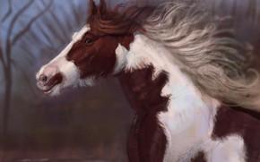 Picture nature, horse, runs