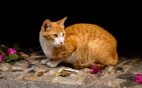 Picture cat, cat, look, leaves, flowers, petals, red, black background