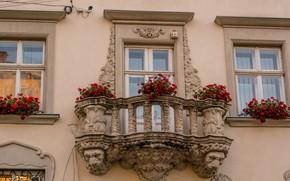 Picture Windows, balcony, Architecture, lions, Ukraine, Ukraine, Lions, Lions, flowers, Windows, Cvety, Levi