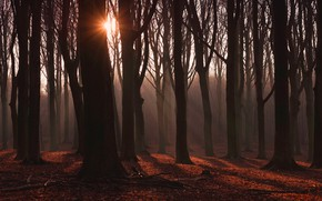 Picture autumn, forest, the sun, rays, light, trees, branches, fog, trunks, foliage, haze, twilight