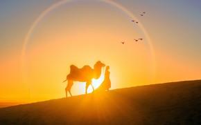 Picture girl, the sun, sunset, desert, the evening, camel, silhouettes, Sunset, Bird, Camel, Warm, Beautiful Desert