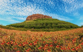 Picture field, the sky, clouds, flowers, stones, hill, meadow, Thailand, a lot