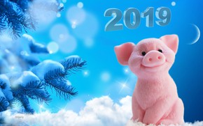 Picture snow, snowflakes, the moon, new year, tree, pigs, 2019