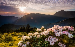 Picture the sky, the sun, clouds, rays, trees, landscape, flowers, mountains, nature, fog, glare, dawn, hills, …