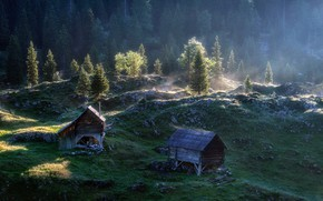 Picture forest, fog, morning, houses