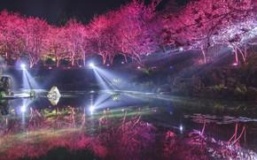 Picture light, trees, night, lake, Park, Japan, spring