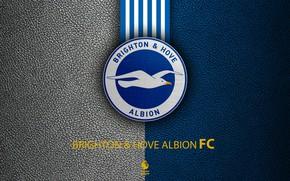 Picture wallpaper, sport, logo, football, English Premier League, Brighton and Hove Albion